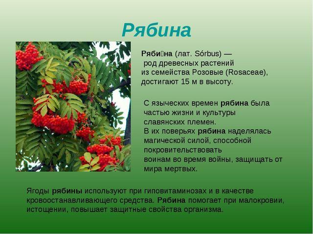 Рябина Ряби́на (лат. Sórbus)— род древесных растений из семейства Розовые (R...