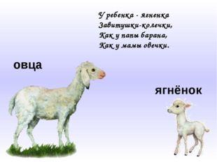овца ягнёнок У ребенка - ягненка Завитушки-колечки, Как у папы барана, Как у