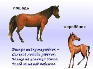 Выгнул шейку жеребёнок – Сильной лошади ребёнок, Только на копытца встал, Всл