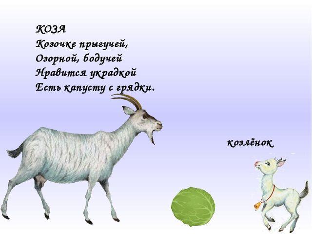 КОЗА Козочке прыгучей, Озорной, бодучей Нравится украдкой Есть капусту с гряд...
