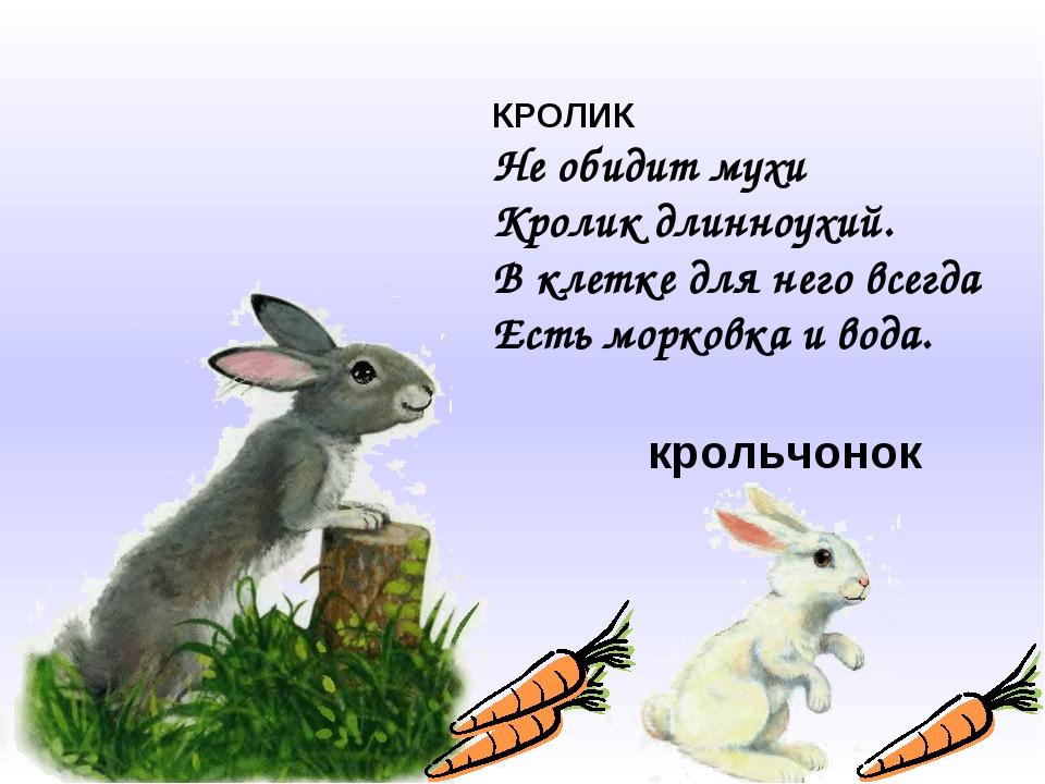 КРОЛИК Не обидит мухи Кролик длинноухий. В клетке для него всегда Есть морков...