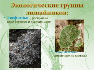 Эпифитные – растут на коре деревьев и кустарников Эпилитные – растущие на кам
