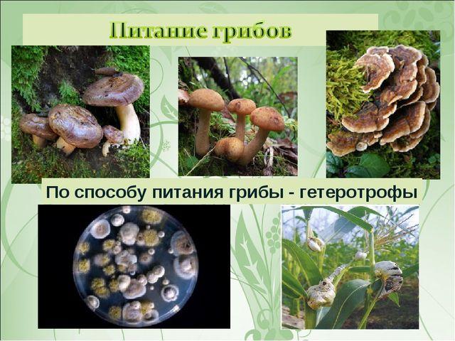 По способу питания грибы - гетеротрофы