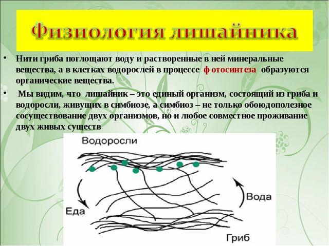 Нити гриба поглощают воду и растворенные в ней минеральные вещества, а в клет...