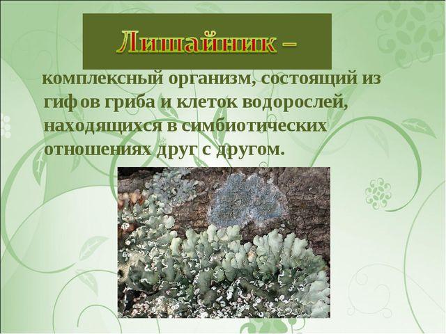 комплексный организм, состоящий из гифов гриба и клеток водорослей, находящи...