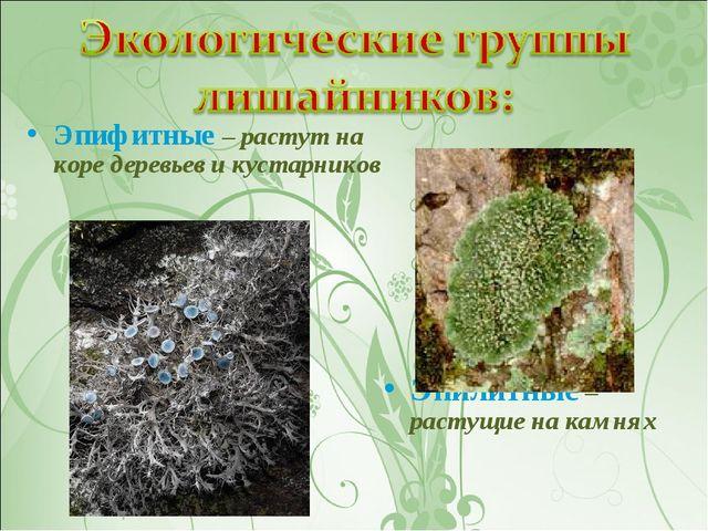 Эпифитные – растут на коре деревьев и кустарников Эпилитные – растущие на кам...