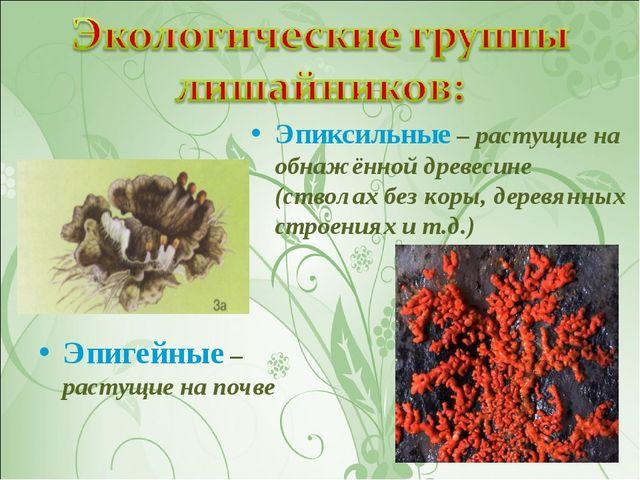Эпигейные – растущие на почве Эпиксильные – растущие на обнажённой древесине...