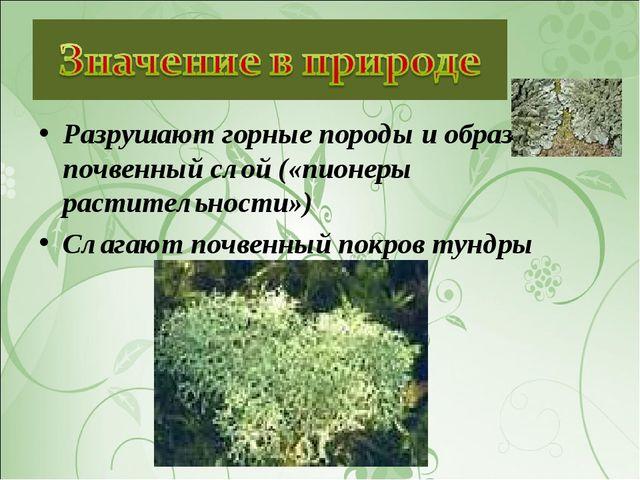 Разрушают горные породы и образуют почвенный слой («пионеры растительности»)...