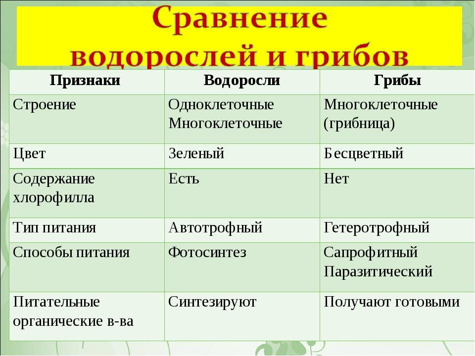 Признаки ВодорослиГрибы СтроениеОдноклеточные Многоклеточные Многоклеточн...