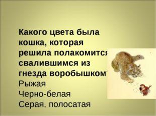 Какого цвета была кошка, которая решила полакомится свалившимся из гнезда вор