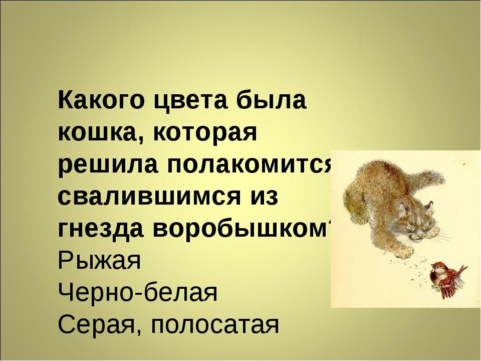 Какого цвета была кошка, которая решила полакомится свалившимся из гнезда вор...