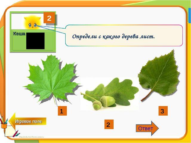 2 Кеша Определи с какого дерева лист. 1 2 3 Ответ