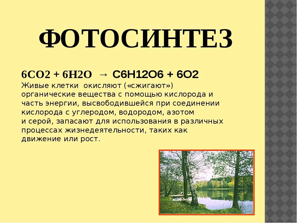 ФОТОСИНТЕЗ 6CO2 + 6H2O → C6H12O6 + 6O2 Живые клетки окисляют («сжигают») орга...