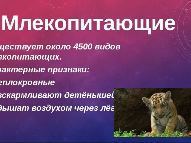 Млекопитающие Существует около 4500 видов млекопитающих. Характерные признаки...