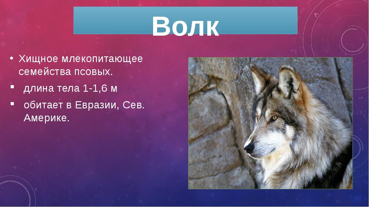 Волк Хищное млекопитающее семейства псовых. длина тела 1-1,6 м обитает в Евра...