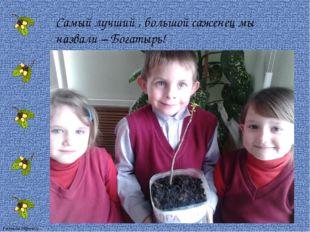 Самый лучший , большой саженец мы назвали – Богатырь! FokinaLida.75@mail.ru