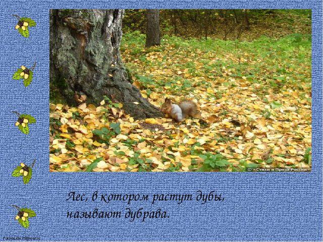 Лес, в котором растут дубы, называют дубрава. FokinaLida.75@mail.ru