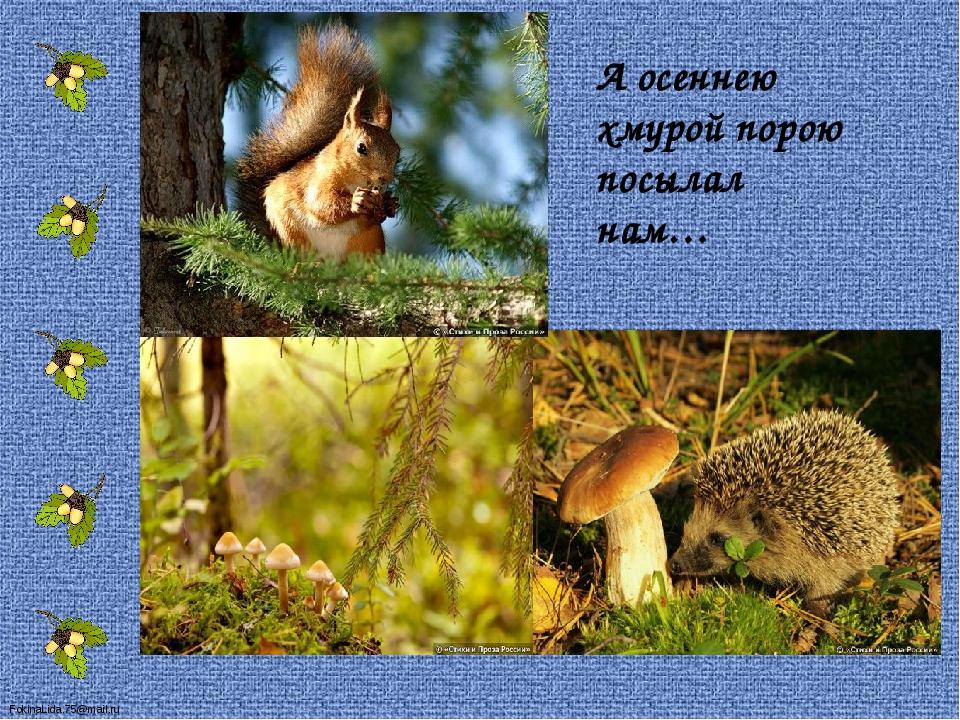 А осеннею хмурой порою посылал нам… FokinaLida.75@mail.ru