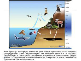 Хотя границы биосферы довольно узки, живые организмы в их пределах распределе