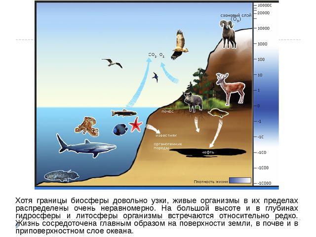 Хотя границы биосферы довольно узки, живые организмы в их пределах распределе...