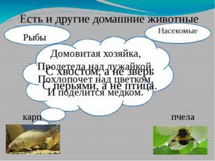 Есть и другие домашние животные С хвостом, а не зверь С перьями, а не птица.