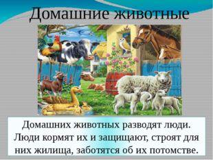 Домашние животные Домашних животных разводят люди. Люди кормят их и защищают,