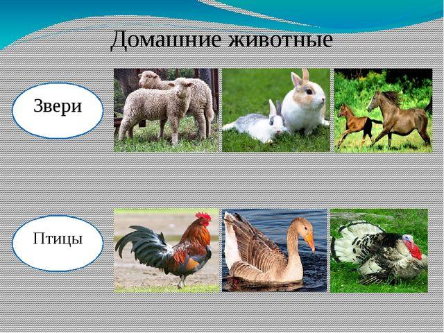 Домашние животные Звери Птицы