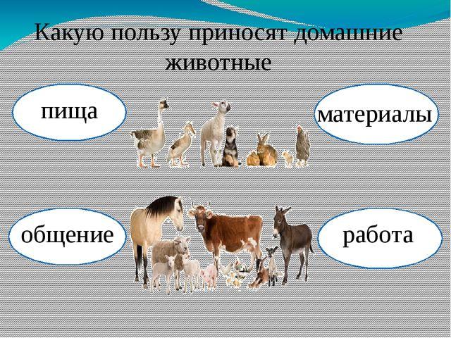 Какую пользу приносят домашние животные пища работа материалы общение