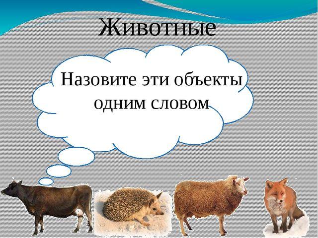 Назовите эти объекты одним словом Животные