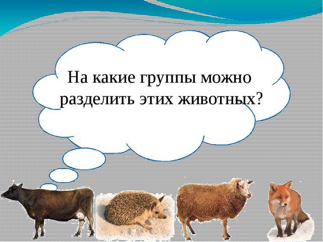 На какие группы можно разделить этих животных?