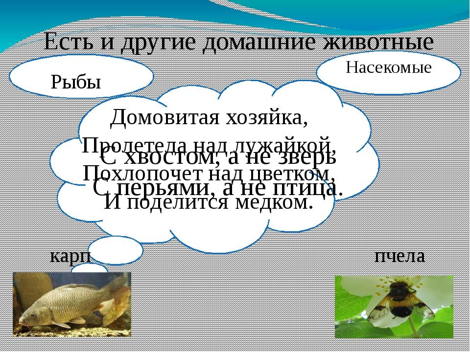 Есть и другие домашние животные С хвостом, а не зверь С перьями, а не птица....