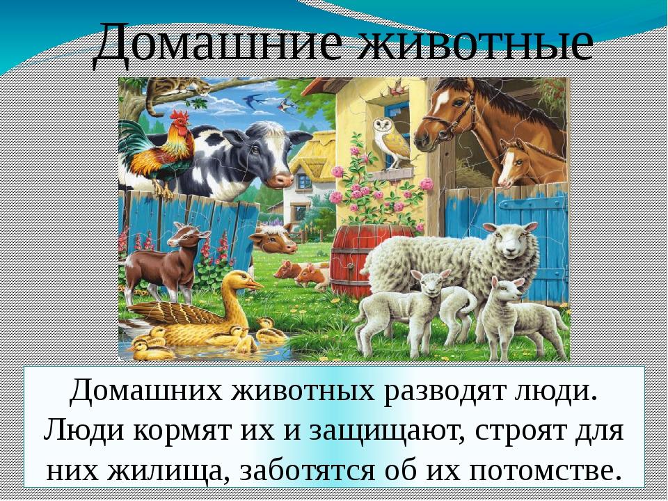 Домашние животные Домашних животных разводят люди. Люди кормят их и защищают,...