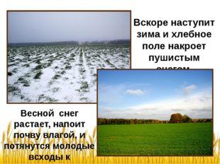 Весной снег растает, напоит почву влагой, и потянутся молодые всходы к солныш