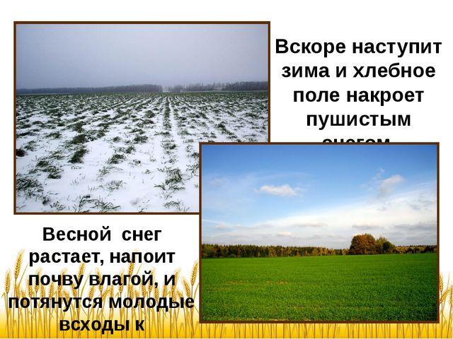Весной снег растает, напоит почву влагой, и потянутся молодые всходы к солныш...