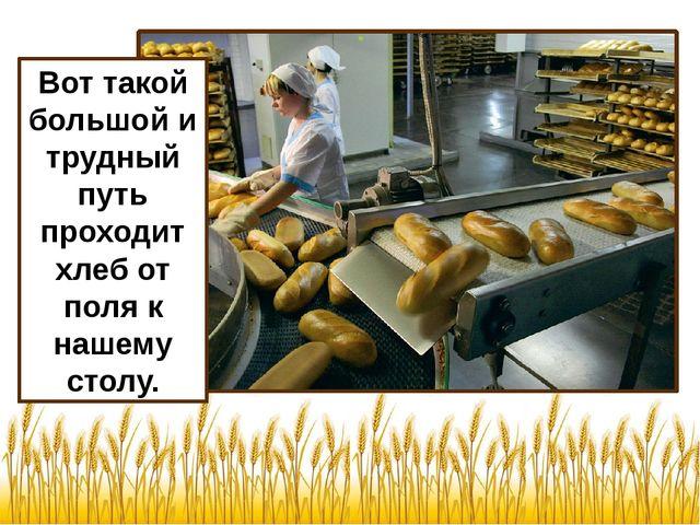 Вот такой большой и трудный путь проходит хлеб от поля к нашему столу.