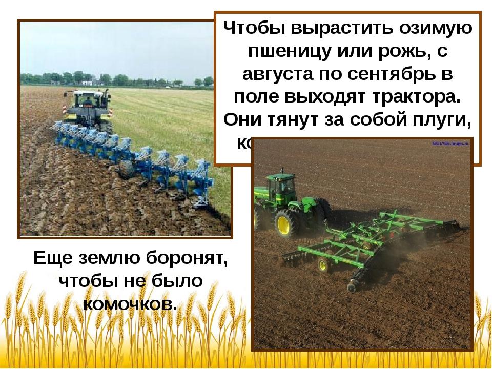 Чтобы вырастить озимую пшеницу или рожь, с августа по сентябрь в поле выходят...