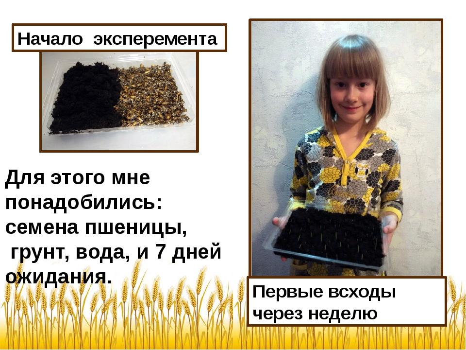Начало эксперемента Для этого мне понадобились: семена пшеницы, грунт, вода,...