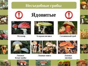Несъедобные грибы Бледная поганка Сатанинский гриб Мухомор Ложные опята Ложны