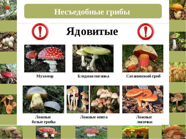 Несъедобные грибы Бледная поганка Сатанинский гриб Мухомор Ложные опята Ложны...
