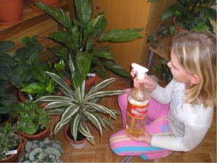 Уход за цветами в жилых помещениях