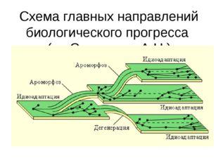Схема главных направлений биологического прогресса (по Северцеву А.Н.)
