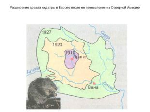 Расширение ареала ондатры в Европе после ее переселения из Северной Америки