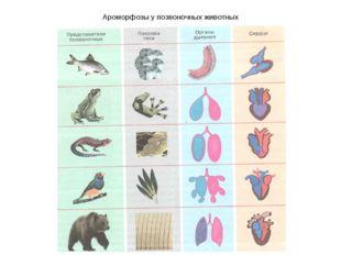 Ароморфозы у позвоночных животных