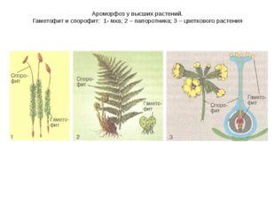 Ароморфоз у высших растений. Гаметофит и спорофит: 1- мха; 2 – папоротника; 3
