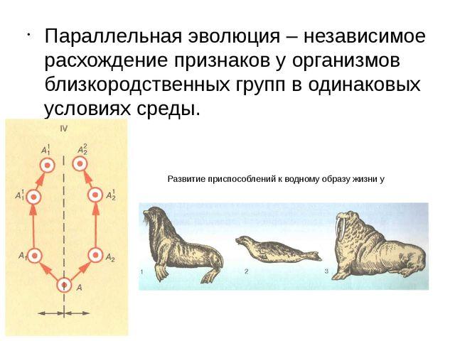 Параллельная эволюция – независимое расхождение признаков у организмов близко...