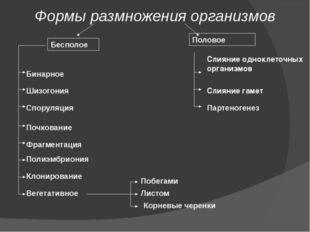 Формы размножения организмов Бесполое Половое Бинарное Шизогония Споруляция В