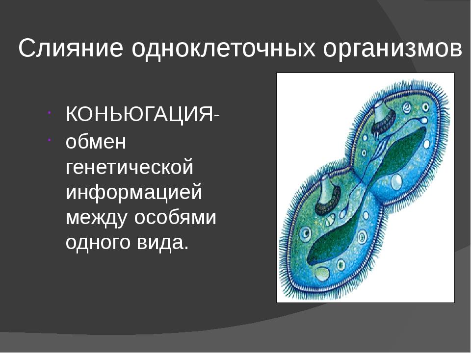 Слияние одноклеточных организмов КОНЬЮГАЦИЯ- обмен генетической информацией м...