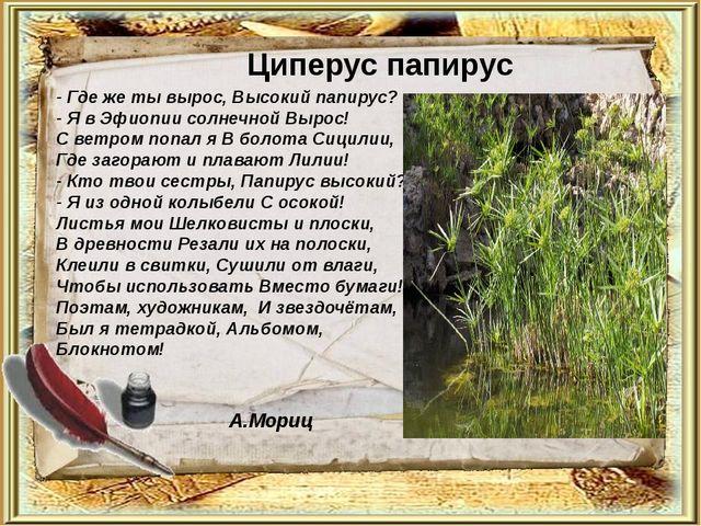 Циперус папирус - Где же ты вырос, Высокий папирус? - Я в Эфиопии солнечной В...