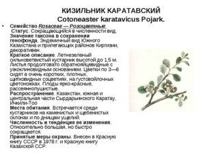 КИЗИЛЬНИК КАРАТАВСКИЙ Cotoneaster karatavicus Pojark.   СемействоRosaceae