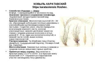 КОВЫЛЬ КАРАТАВСКИЙ Stipa karataviensis Roshev.  СемействоPoaceae — Злаки Ст